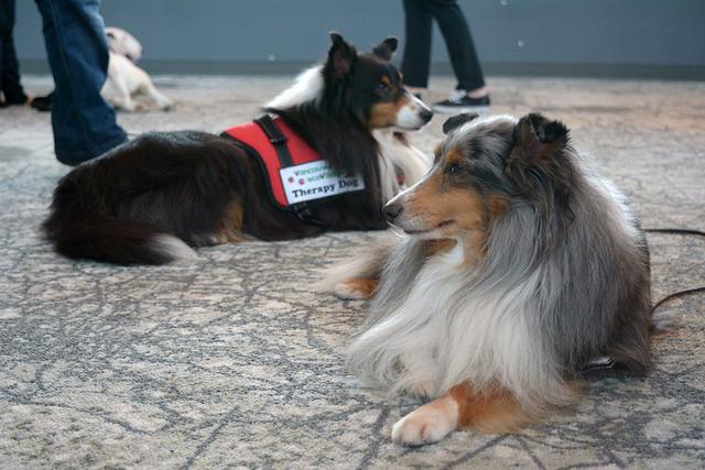 doggydetress1