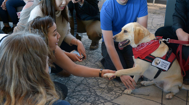 On September 20, therapy dogs from Vancouver ecoVillage helped UBC students unwind at a Doggy De-stress event.